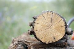 Круглый конец спиленной древесины на зеленой предпосылке Стоковые Изображения