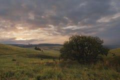 Круглый стог сена на склоняя зеленом поле в пасмурной погоде Стоковые Изображения RF