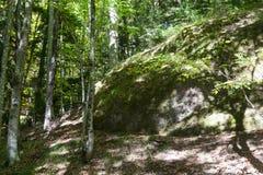круглый утес в sunlit лесе Стоковая Фотография RF