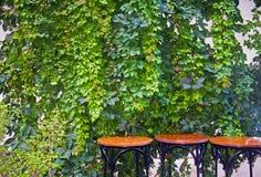 3 круглых деревянного стола с предпосылкой плюща стоковое фото rf