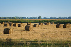 Круглая порука сена в поле стоковые изображения rf