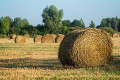 Круглая порука сена в поле Стоковое фото RF