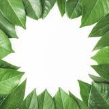 Круглая рамка зеленых листьев Творческий план листьев на белой предпосылке Плоское положение Взгляд сверху Стоковое Изображение RF