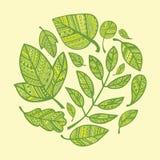 Круг декоративных зеленых листьев Стоковые Фотографии RF
