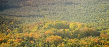 Круг дерева в осеннем лесе в зоне kraj чеха Machuv 13-ого октября 2018 стоковые фото
