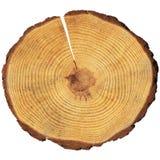 круг деревянный Стоковое Изображение