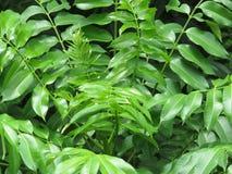 Круг листьев - мандала Стоковые Изображения RF