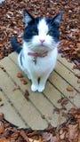 Круг кота жизни Стоковая Фотография