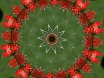 Круг маргаритки Gerber Стоковая Фотография