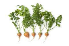 круг морковей младенца свежий Стоковое Изображение RF