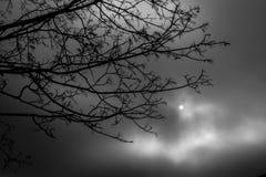 Круглое Солнце Стоковые Фото