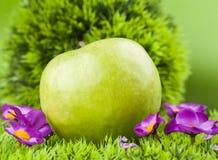 Круглое яблоко Стоковые Изображения RF
