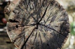 Круг тимберса Стоковое Изображение RF