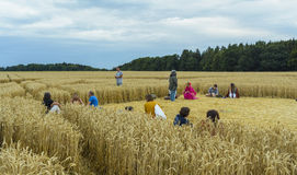 Круг урожая в пшеничном поле стоковая фотография rf