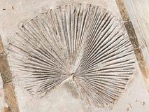 Круглые лист завода Стоковые Изображения RF