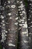 Круглые стволы дерева совместно Стоковые Фото