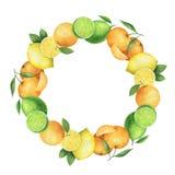 Круглый венок акварели с сочными апельсинами, мандаринами, лимонами и известкой бесплатная иллюстрация