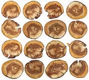16 круглых перекрестных деревянных отрезков Стоковые Изображения
