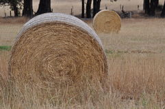 2 круглых связки сена Стоковая Фотография RF