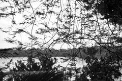 Кружевной тропический лес Стоковое Фото