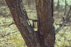 Кружка заклинила между разветвленным деревом на солнечный день стоковые фотографии rf