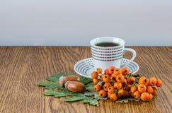 Кружка кофе, немного жолудей, ветви золы горы и leav дуба Стоковая Фотография