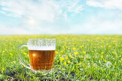 кружка холода пива Стоковое Фото