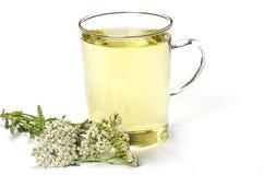 Кружка чая с травяным чаем стоковое изображение rf