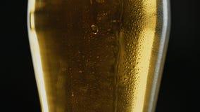 Кружка Misted пива kraft холодного света, падений пропускает вниз с стекла, в баре или пабе видеоматериал