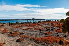 Круизы увиденные от земли, нескольк кактус opuntia и красный цвет стоковые фото