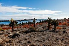 Круизы увиденные от земли, нескольк кактус opuntia и красный цвет стоковые изображения