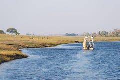 Круиз шлюпки и сафари живой природы на граница реке Chobe, Намибии Ботсване, Африка Национальный парк Chobe, известный запас wild Стоковые Фотографии RF