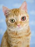 Крупно-наблюданное kittie стоковые фотографии rf