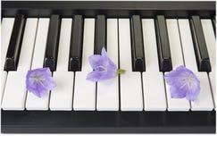 Крупный план аппаратуры клавиатуры рояля Домашний синтезатор Стоковое фото RF