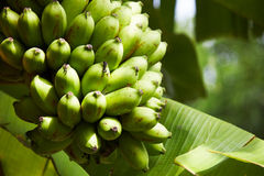 Крупный план бананов Стоковое Фото