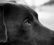 Крупный план бездомной собаки Стоковое Фото