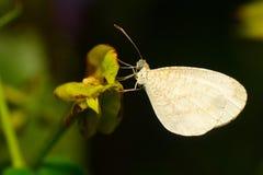 Крупный план белой бабочки на зеленых лист Часть селективного фокуса и урожая Стоковая Фотография