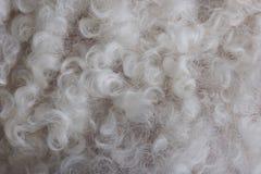 Крупный план белых шерстей patern Стоковая Фотография