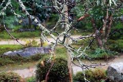 Крупный план ветвь дерева с мхом лишайника и предпосылка вне фокусирует сад Стоковая Фотография