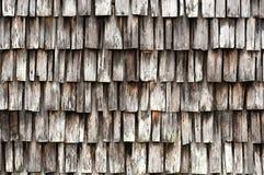 Крупный план встряхиваний кипариса на экстерьере старого здания стоковое фото rf