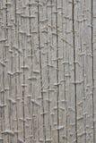 Крупный план выдержанного залаянного coniferous журнала Стоковое Изображение RF