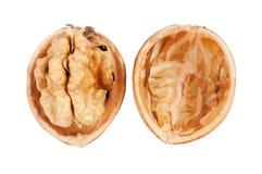 Крупный план грецкого ореха Стоковая Фотография RF