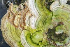 Крупный план грибка трута Стоковое Изображение