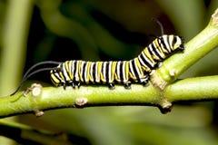 крупный план гусеницы Стоковое Фото