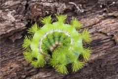 крупный план гусеницы Стоковая Фотография