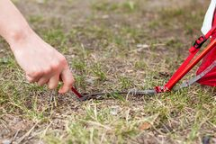 Крупный план девушки вручает размещение красного располагаясь лагерем шатра, съемки макроса колышка и травы стоковые изображения