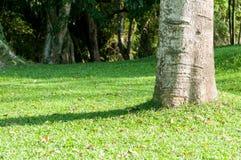 Крупный план дерева в саде Стоковые Изображения RF
