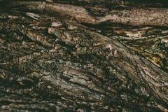 Крупный план древесины темного коричневого цвета Стоковые Изображения RF
