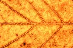 Крупный план желтых и коричневых лист осени стоковая фотография