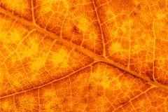Крупный план желтых и коричневых лист осени стоковое изображение rf